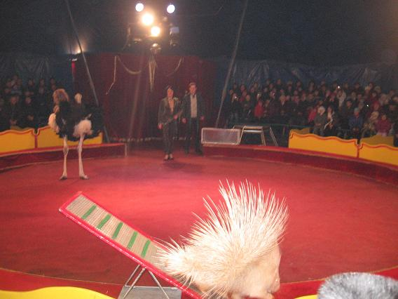 До Тернополя приїхав найкращий мандрівний цирк України